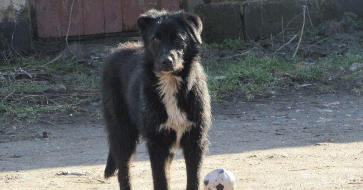 Нападают на старых и малых: в Днепре микрорайон терроризирует стая собак