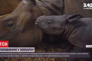 В Вроцлаве впервые за 155 лет родился детеныш индийского носорога