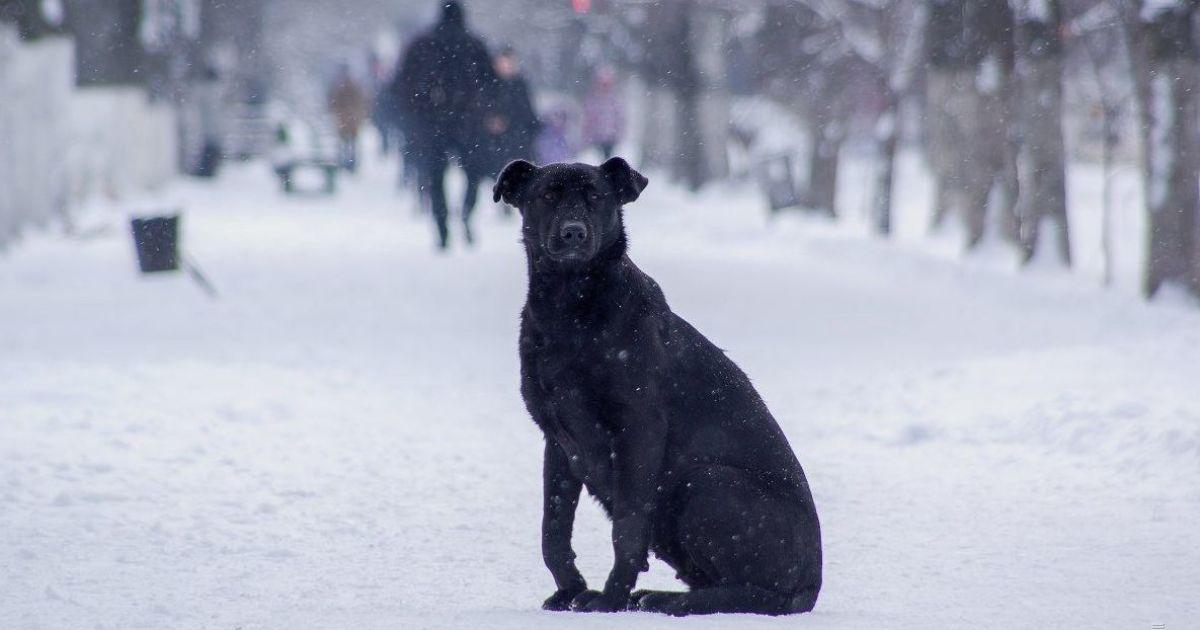 Морози посиляться, майже у всіх областях ітиме сніг: прогноз погоди в Україні на п'ятницю, 15 січня