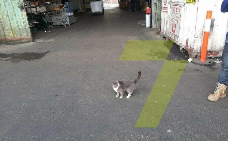 кішка у контейнері_1