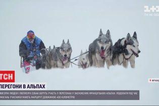 Хвостаті гонщики: у французьких Альпах тривають щорічні перегони на собаках