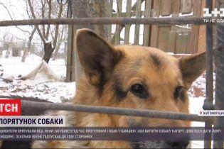 В Житомирской области люди дали овчарке снотворное, чтобы спасти от гибели