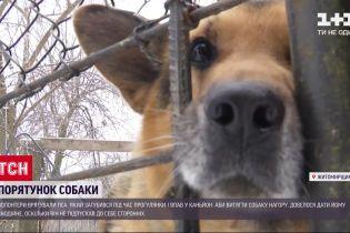 В Житомирской области спасли овчарку, которая упала в каньон