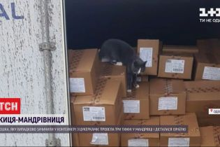 Как кошка-путешественница выжила после 3 недель в морском контейнере