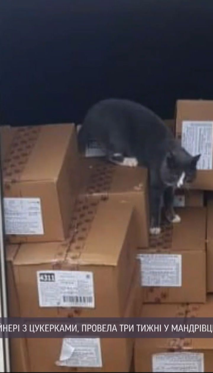 Як кішка-мандрівниця вижила після 3 тижнів у морському контейнері
