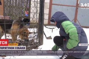 Волонтерам в Житомирской области пришлось спасать овчарку снотворным