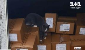 Кошка-путешественница, которая из Одессы попала в Израиль: где сейчас животное и какова ее дальнейшая судьба