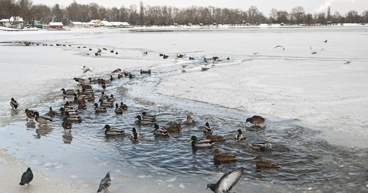 Переважно без опадів та до мінус 25° морозу: прогноз погоди в Україні на неділю, 17 січня