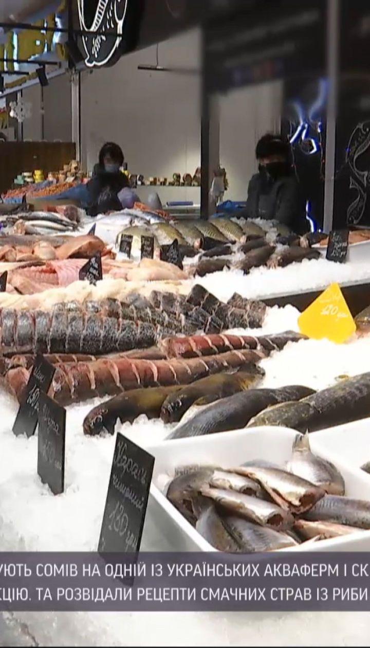 Выращенная в Украине или завезена из-за рубежа: как и где купить свежую рыбу