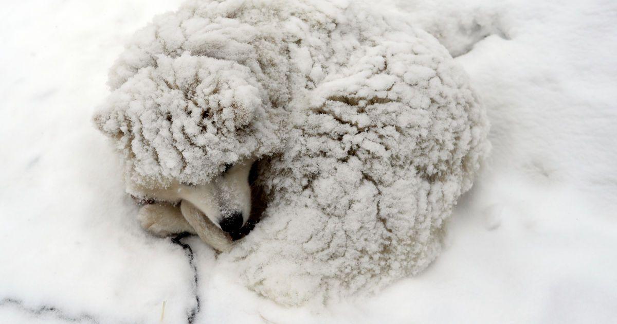 Голодні і холодні: як допомогти тваринам, які зимують просто неба