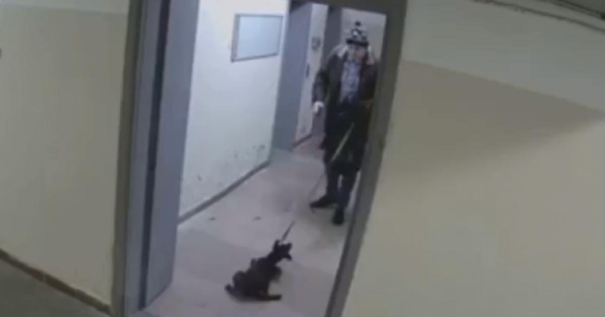 Жестокое избиение щенка в Киеве: против бывшего хозяина начато уголовное производство