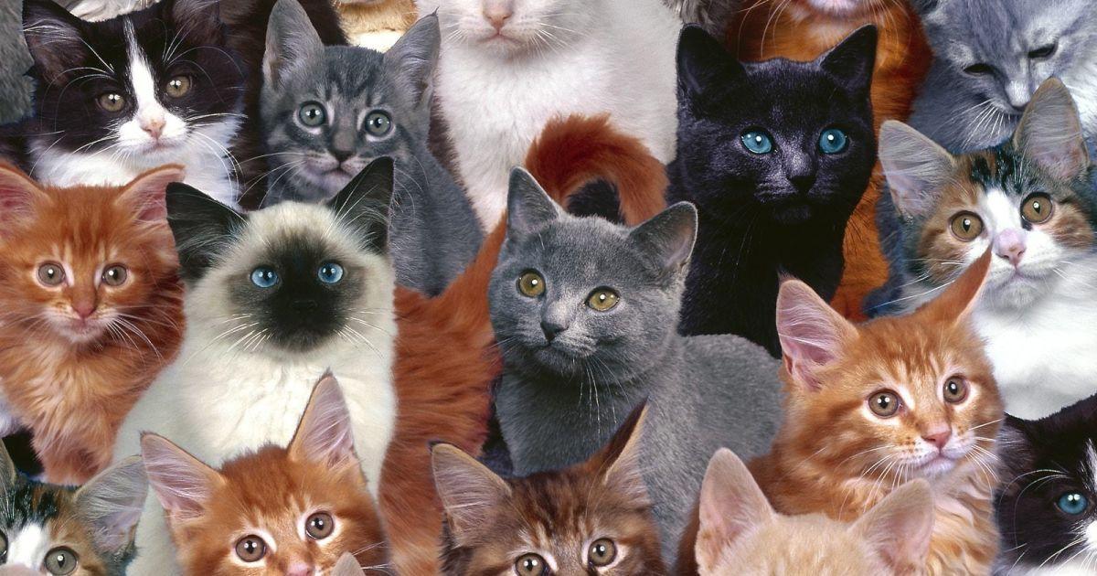 Ученые объяснили, почему у домашних кошек белые лапки