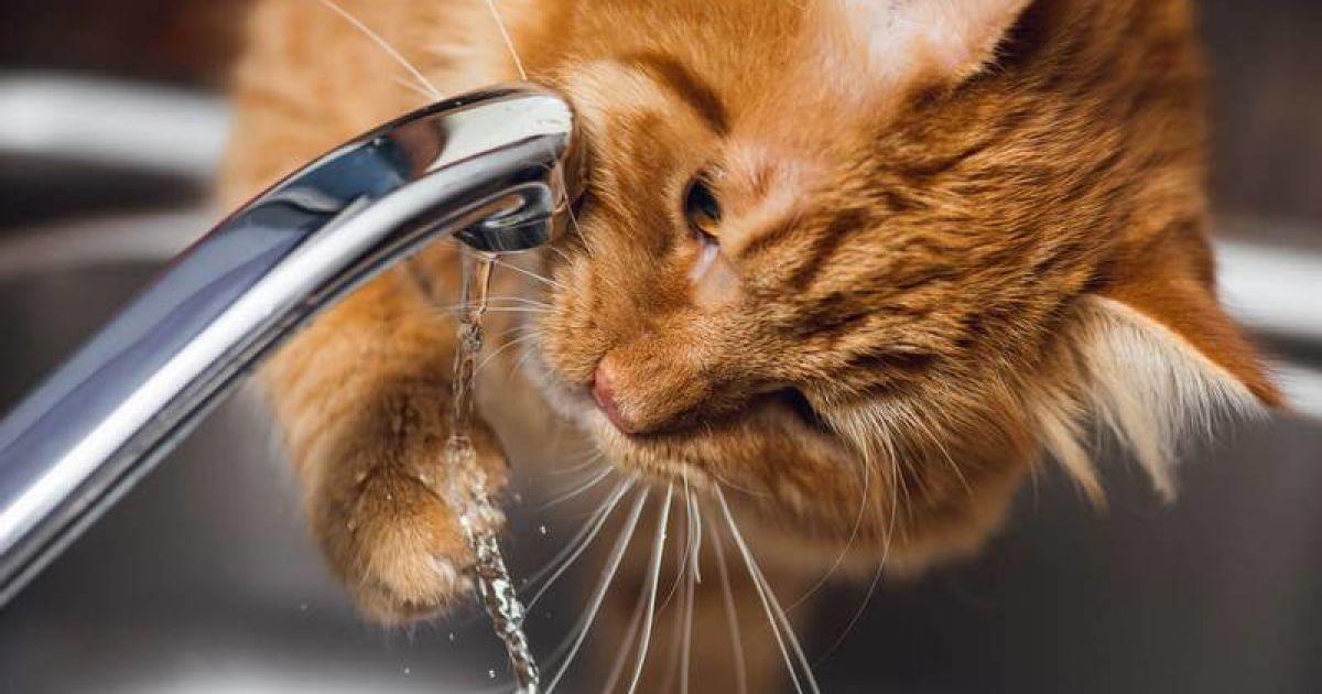 Из-за седьмой аварии за неделю Лозовая осталась без воды