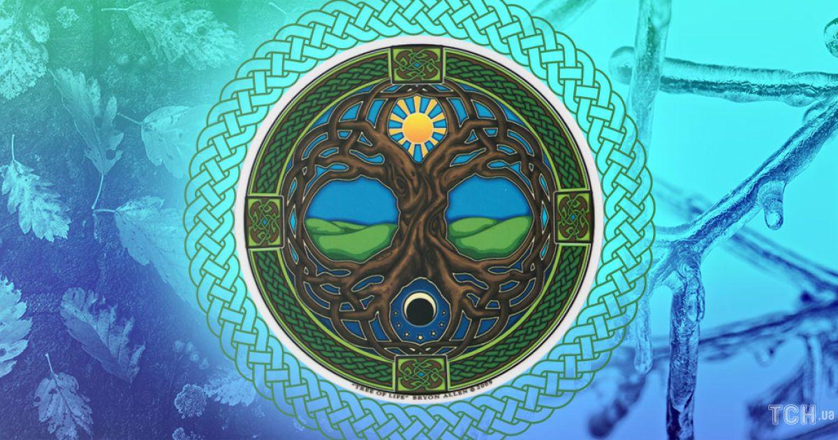 Кельтский календарь деревьев-2021: что скрывают растения