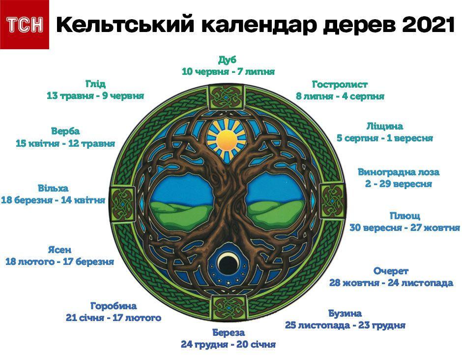 кельтський календар дерев інфографіка