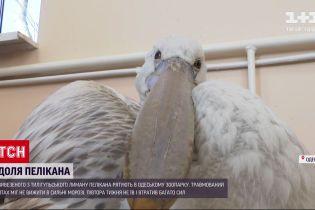 В Одесском зоопарке спасают пеликана
