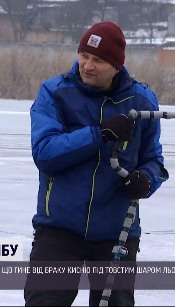 В Кропивницком рыбаки спасали рыбу от недостатка кислорода