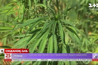 Біля Верховної Ради планується акція на підтримку марихуани з лікувальною метою