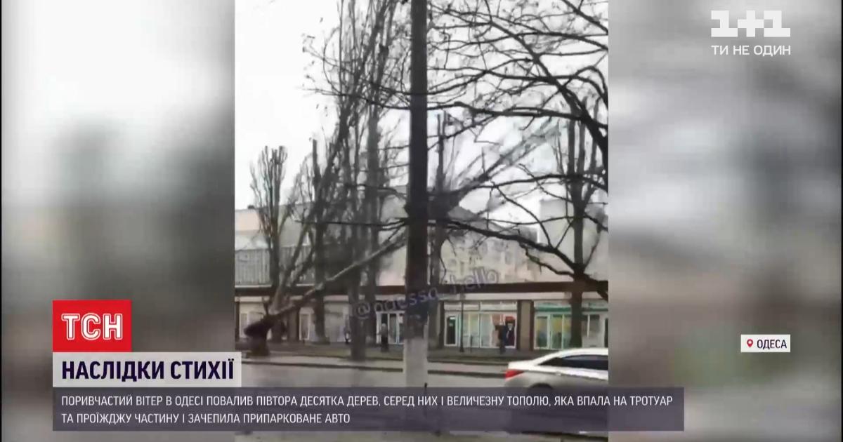 Деревопад в Одессе: падение большого тополя попало на видео очевидцев
