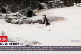 Зоопарк Лондона показал, как его подопечные развлекались под снегом
