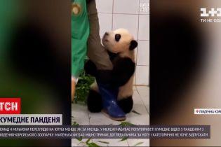Відео з панденям з південно-корейського зоопарку набрало понад 4 мільйони переглядів у YouTube