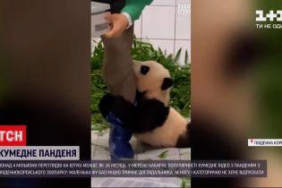 Понад 4 мільйони людей переглянули відео з пандою з південнокорейського зоопарку