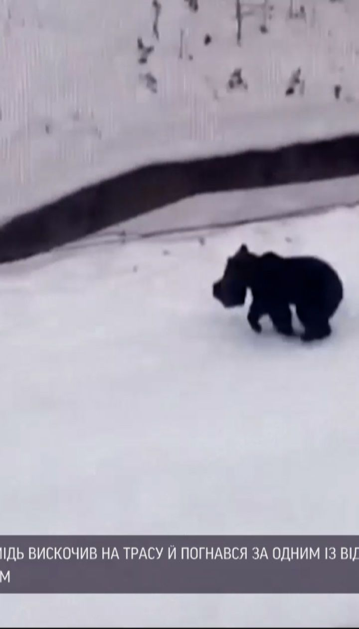 На лыжном курорте в Румынии медведь сильно напугал туристов