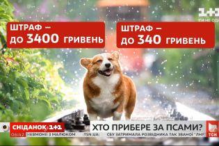 Кто уберет за собаками
