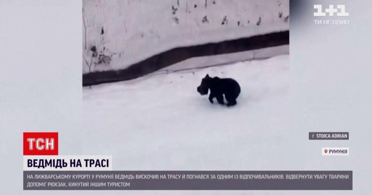 Незваный гость на курорте в Румынии: лыжной трассой разгуливал медведь