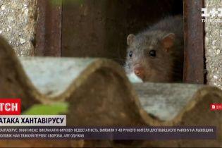 У Львівські області чоловік заразився вірусом, який людині передається від гризунів