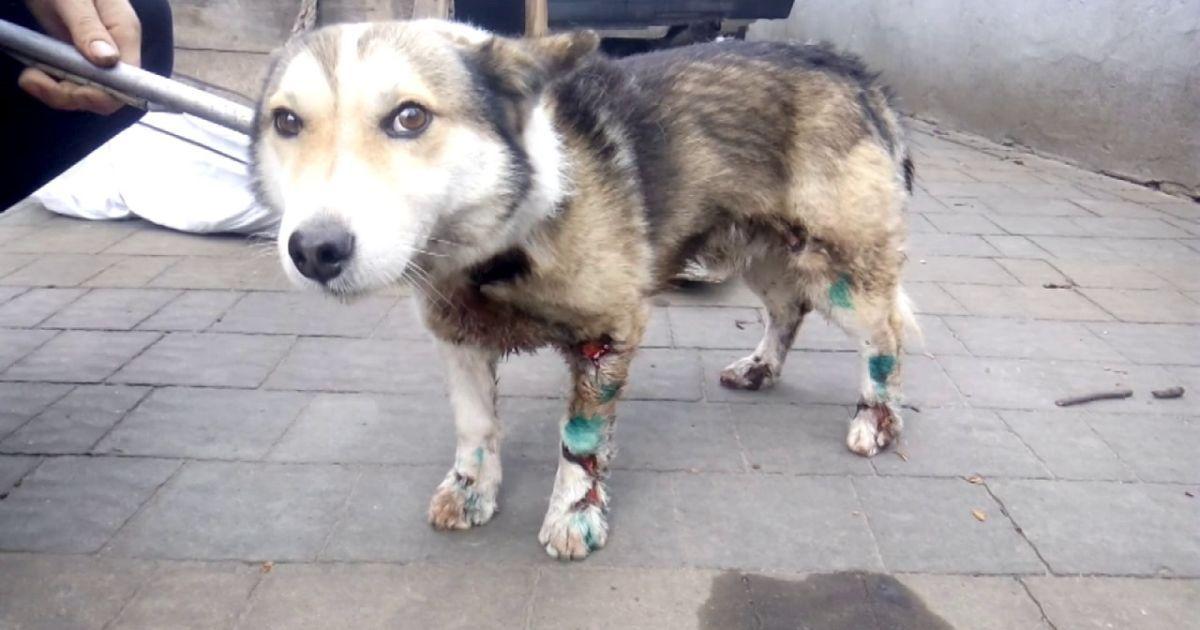 В Киевской области приют для животных отрезало от мира из-за непогоды: сотням животных грозит голод