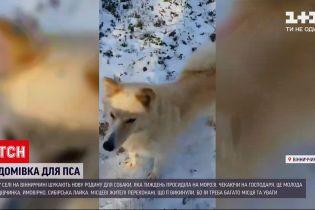 У Вінницькій області собака тиждень чекав на господарів, які її залишили біля лісу