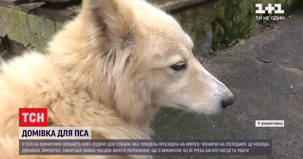 Марьяновский Хатико: брошенный пес жил в морозы у дороги, надеясь на возвращение хозяина
