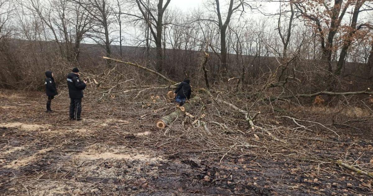В Сумской области на 29-летнего лесника упала ветка: он погиб на месте