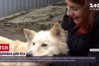 У селі Вінницької області шукають господарів для білосніжної лайки