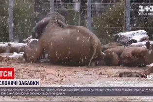У звіринці Аризони слони зраділи раптовому снігопаду
