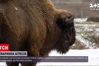 В Киевской области зубр разбил автомобиль туристов на территории экопарка