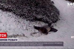У зоопарку Вашингтона панди тішаться зимовій погоді