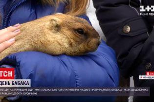 Какой будет весна: в Харьковской области будут будить сурка Тимку