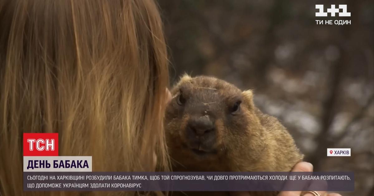 Харьковский сурок Тимка сделал прогноз на приход весны и преодоления коронавируса для украинцев