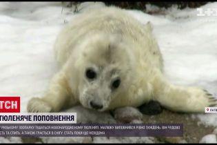 В Риге пополнение - в местном зоопарке родилось тюленя
