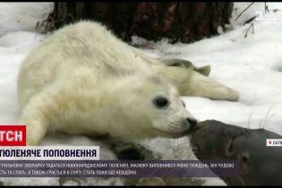 В Рижском зоопарке новорожденный тюлень радуется снегу