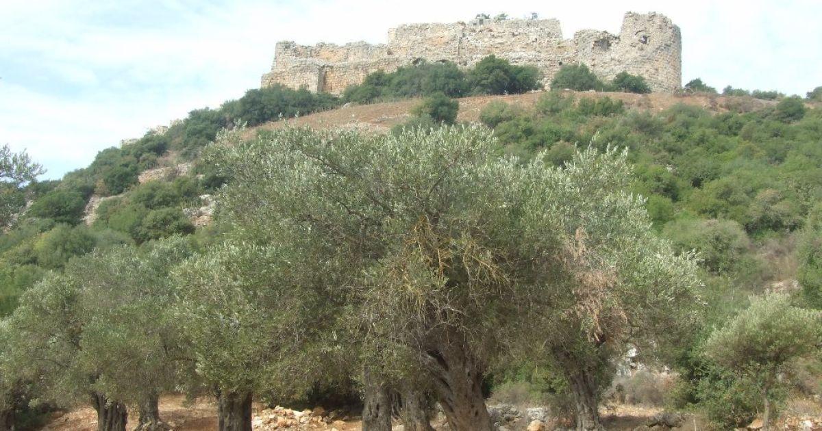 В Ізраїлі знайдено найдавніший оливковий завод: йому 6600 років
