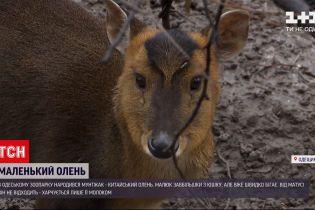 В Одесском зоопарке появился на свет детеныш китайского оленя