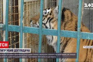 Новости Украины: почему тигр напал на опытного смотрителя