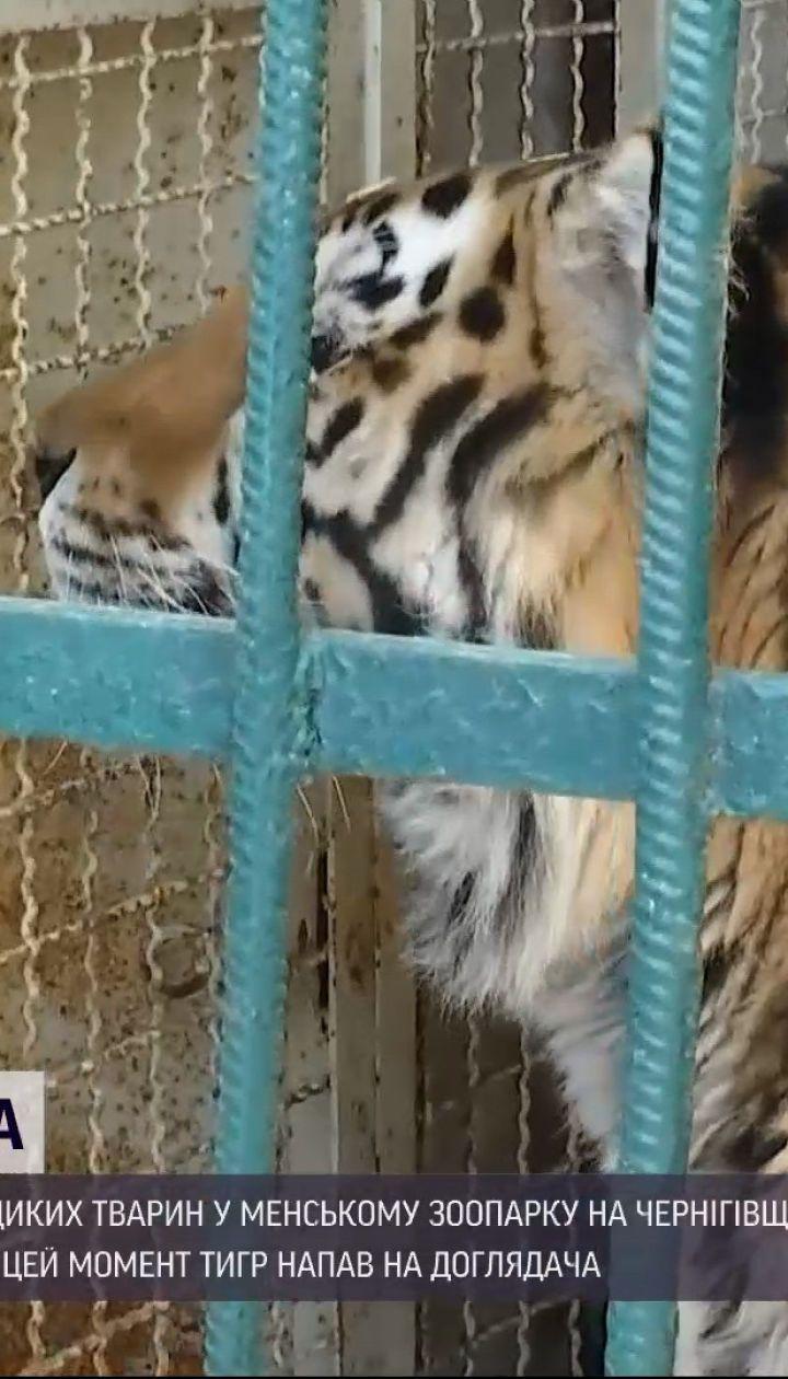 Новини України: чому тигр напав на досвідченого доглядальника