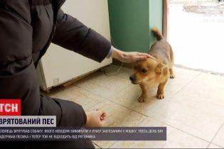 Новости Украины: мальчик вытащил из реки завязанную в мешке собаку и отогрел ее