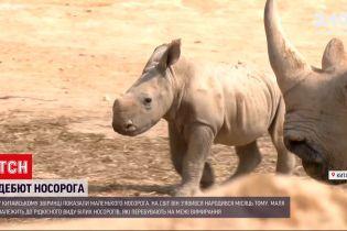 Новости мира: в китайском зоопарке состоялся дебют маленького носорога