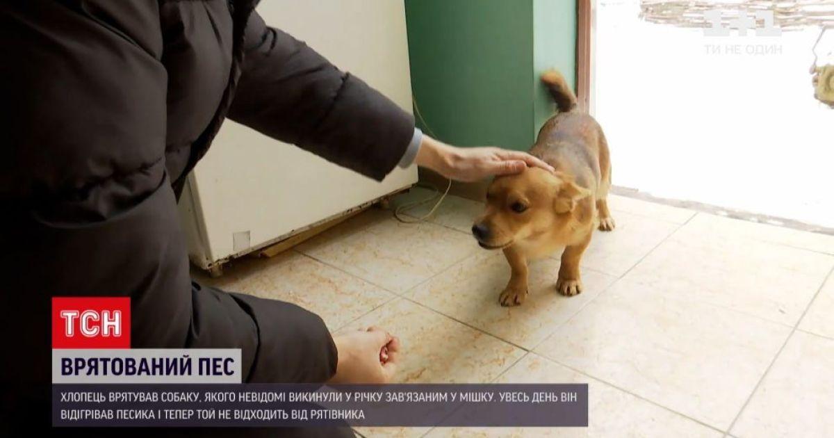 У Львівській області невідомі зав'язали собаку в мішку та кинули до річки