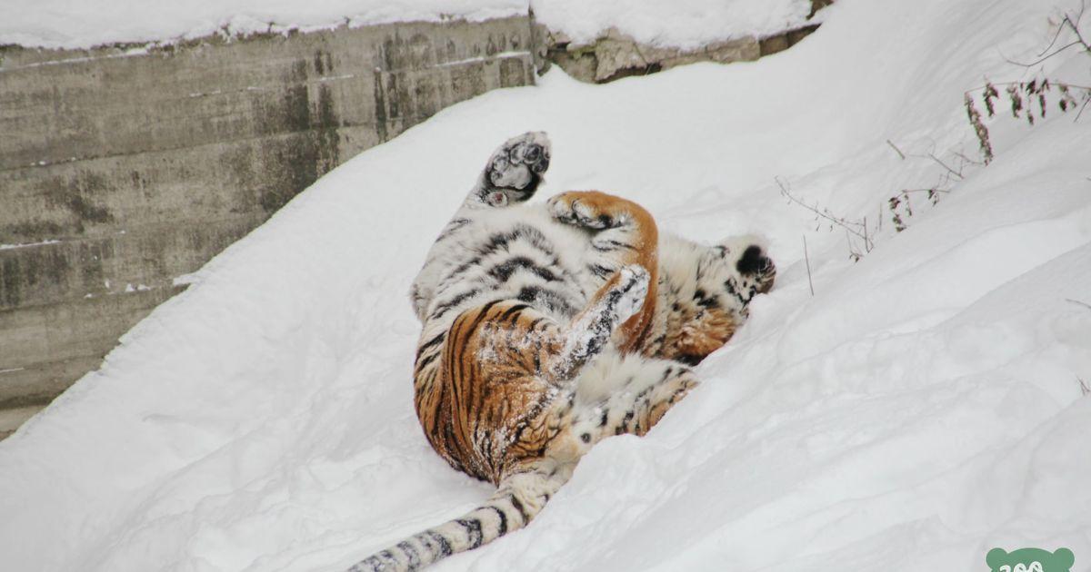 @ Київський зоопарк